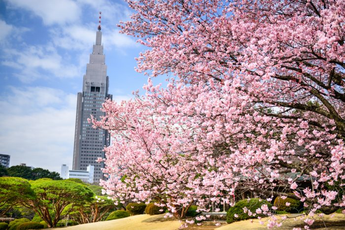 Home.fit Tokyo-Cherry-Blossoms-photo-via-Depositphotos-700x467 When and Where to See Cherry Blossoms in Japan This 2021