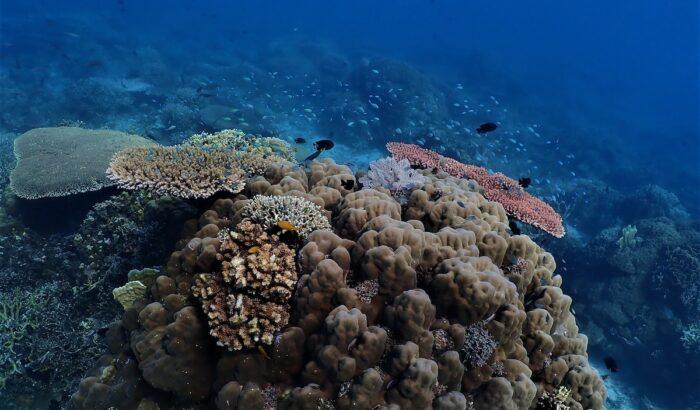 Binuni Reef