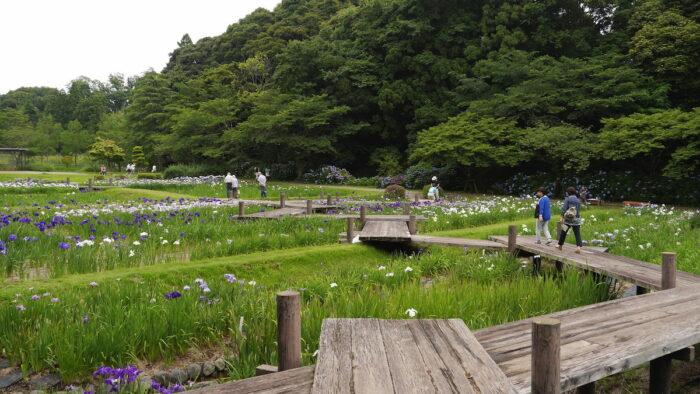Hamamatsu Flower Park by Hidetsugu Tonomura via Flickr CC