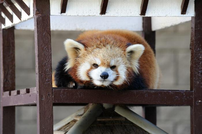 Hamamatsu Zoological Gardens by Bong Grit via Flickr CC