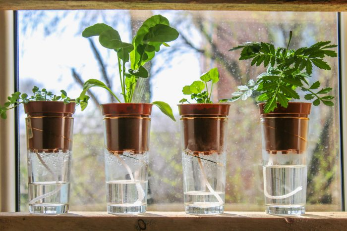 Self Watering Pots photo via Depositphotos