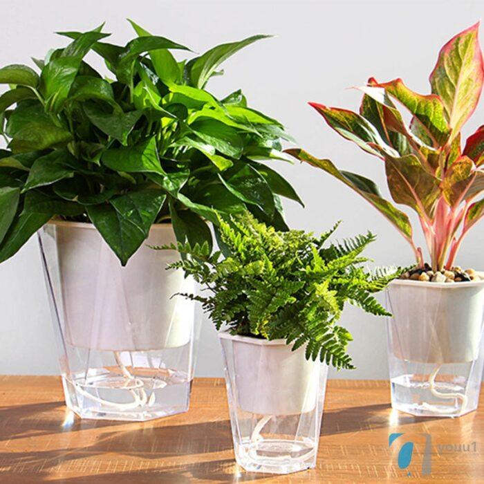 Self Watering Transparent Flower Pot