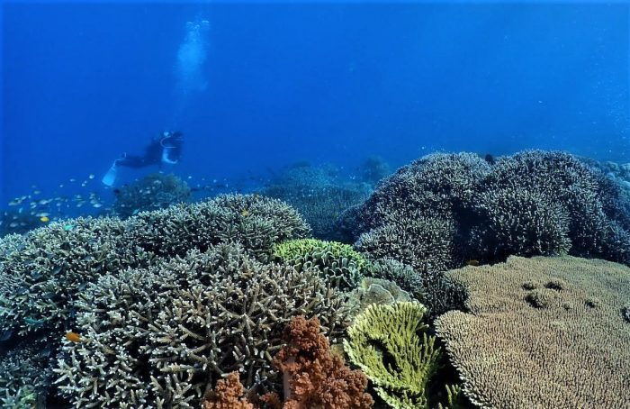 Sumbang Point dive site