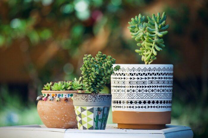 Cactus on Terracotta