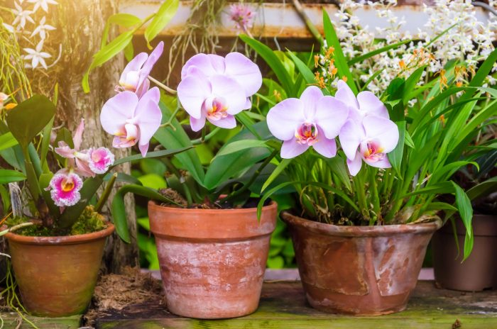 Orchids on Clay Pot Terracotta photo via Depositphotos