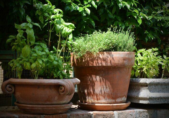 Terracotta Pots for Houseplants