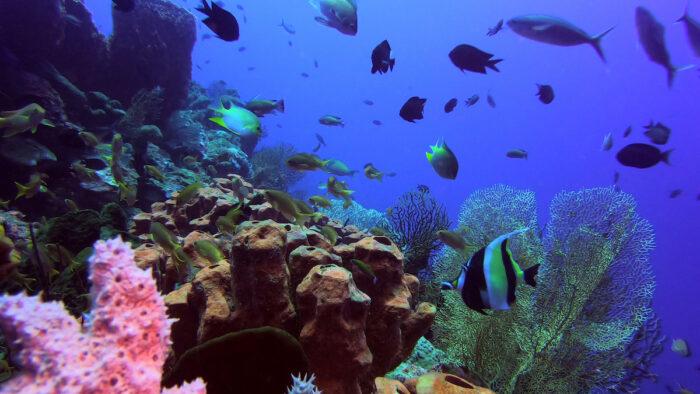 Sarangani Bay dive site by Bretch Garcinez