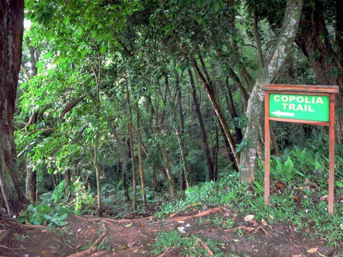 Copolia Trail Mahe Seychelles by David Stanley via Wikipedia cc