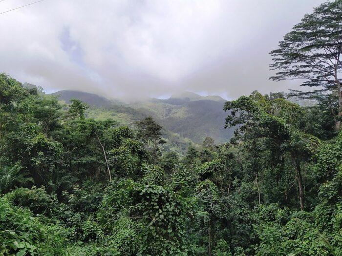 Morne Seychellois National Park by Radoslaw Botev via Wikipedia CC