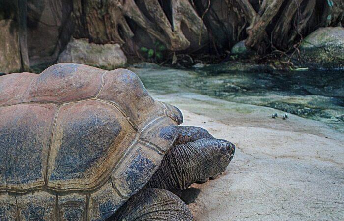 Seychelles Giant Tortoises photo via Pixabay